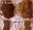 Czysty i pachnący tytoń,tyton po fermentacji 733-O29-357